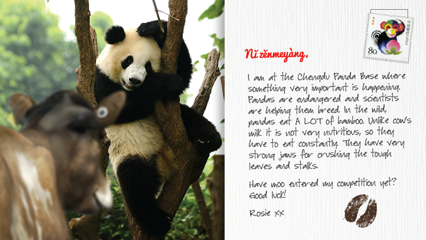 Rosie PostCard - Panda
