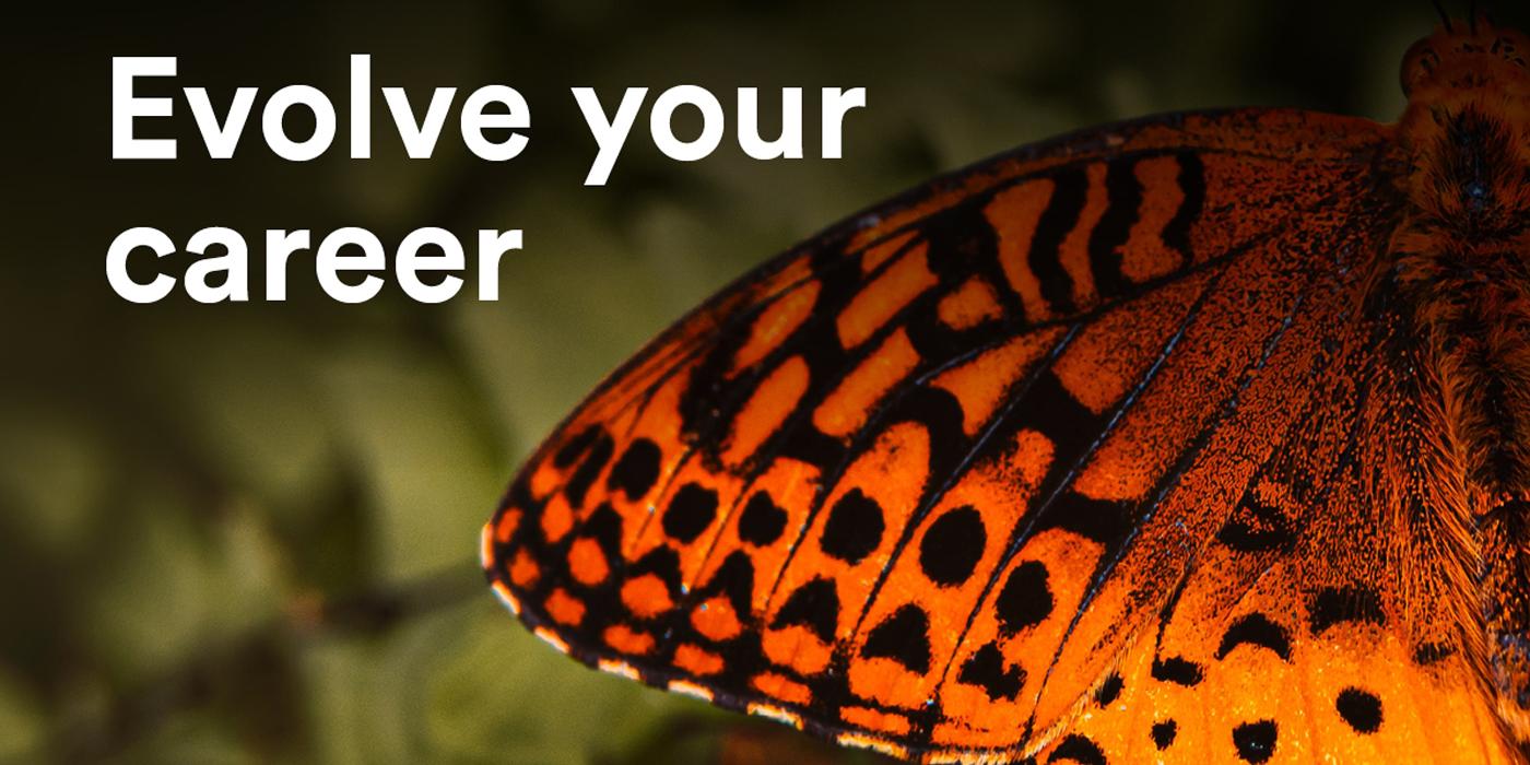 waikato uni banner butterfly